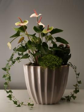 Σύνθεση φυτών σε πύλινη γλάστρα